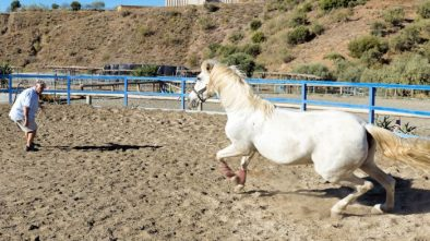 camino recovery horse lovers